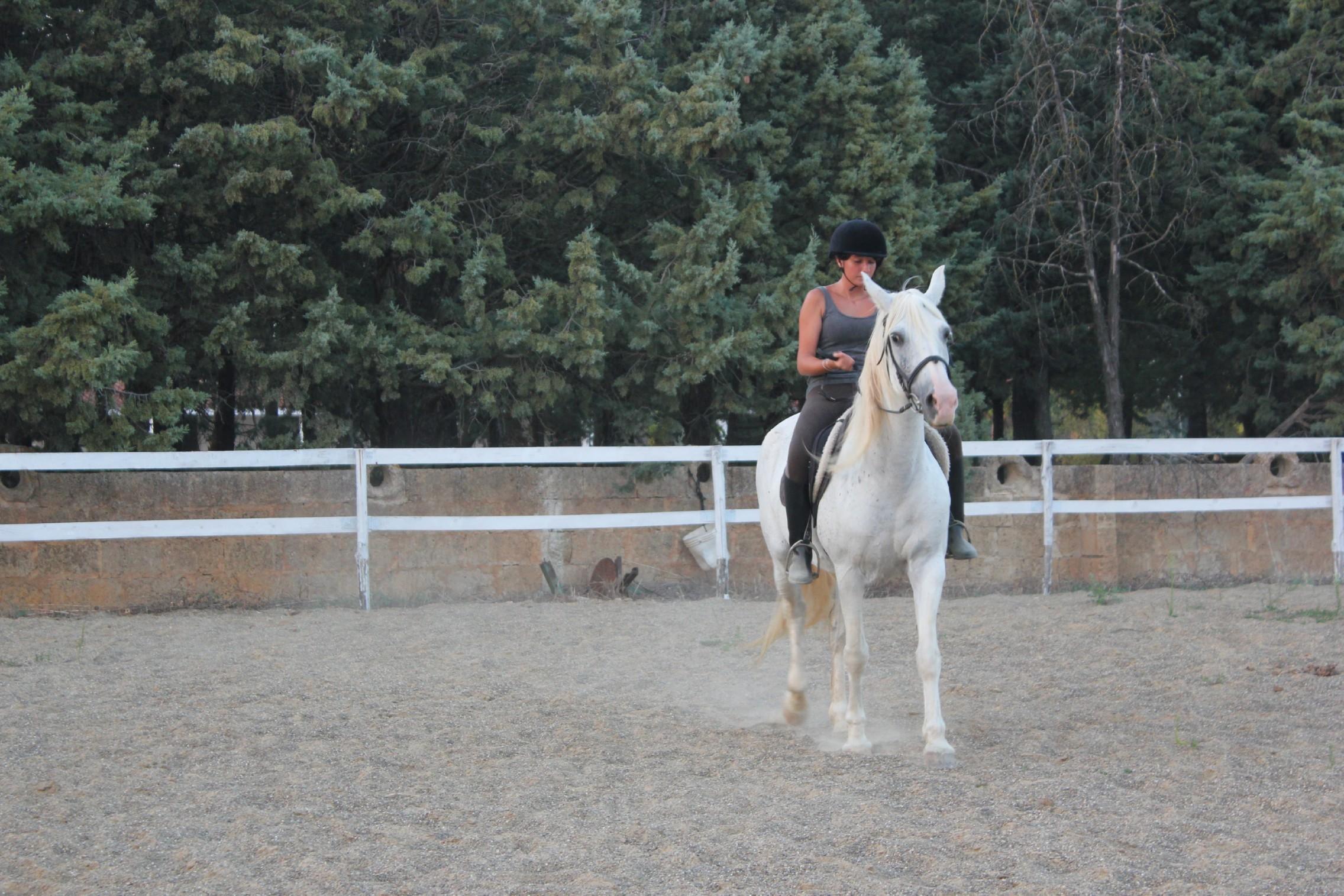 Horse Riding Center